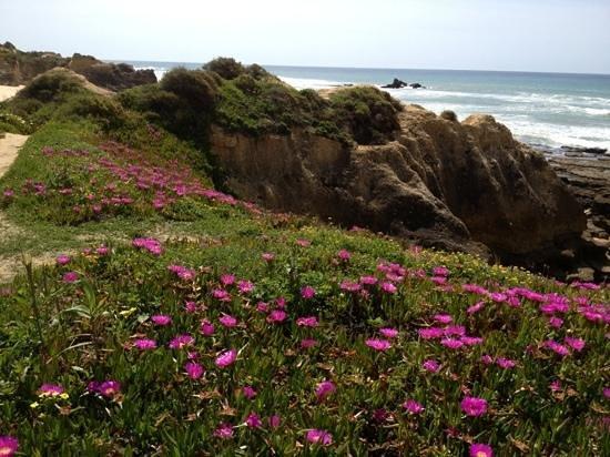 Bayside Salgados : amazingly beautiful beach