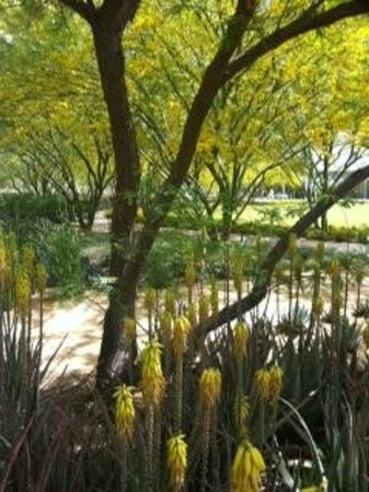 Sunnylands Garden