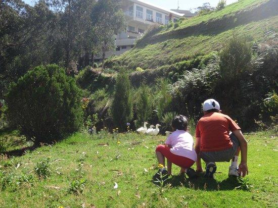 Sinclairs Retreat Ooty: Birds stalking