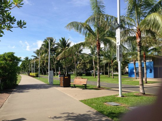 Reef Palms: 散歩道