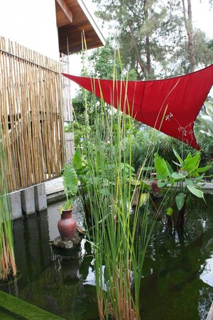 Belum Rainforest Resort: fish pond