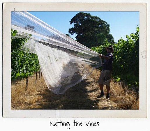 House of Cards Wines: Netting the vines