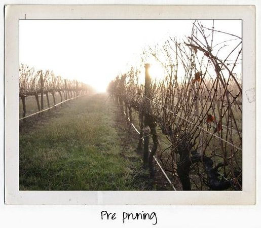 House of Cards Wines: Pruning time