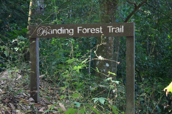 Belum Rainforest Resort: Banding Forest Trail
