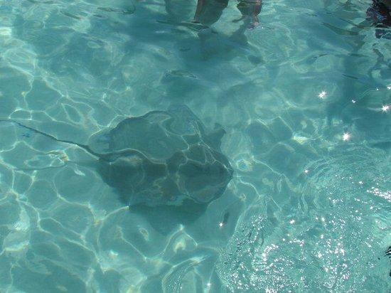 H2OGrandCayman Sea Tours