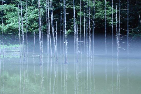 Oyamadairi Park: 大田切池