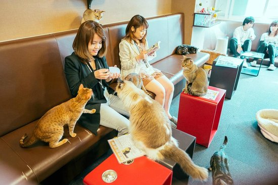 Cafe Kitty Cat Game