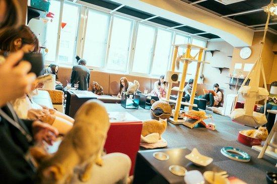 Tokyo Cat Cafe Calico