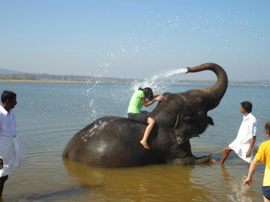 Orange County Resorts Kabini: Bath with elephant