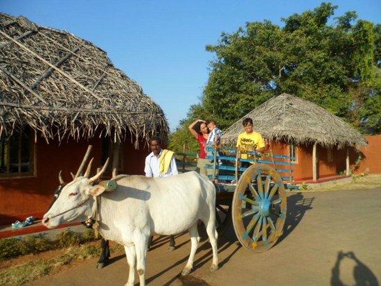 Evolve Back, Kabini: Bullock cart