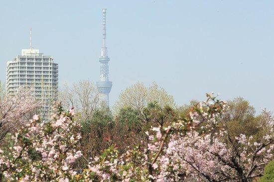 Kiba Park : 春の草木に埋もれているようなスカイツリー
