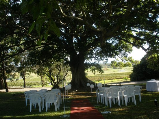 Coolangatta Estate: The Ceremony Under the Fig