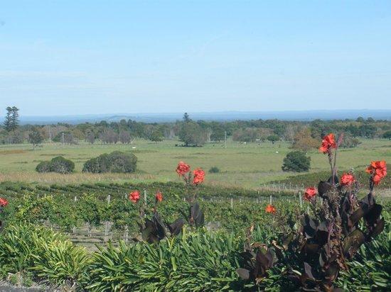 Coolangatta Estate: Lovely Scenery