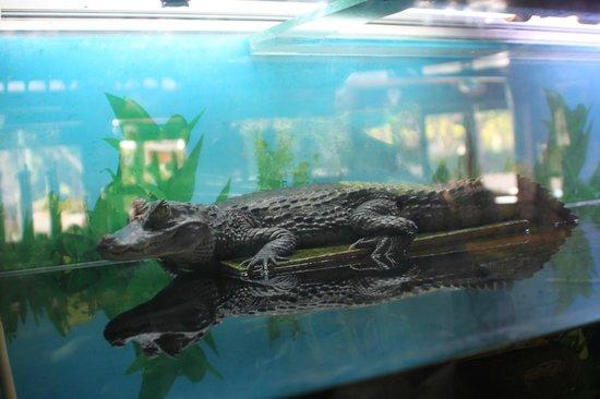 Crocodile Pub