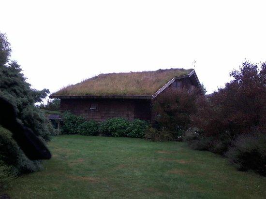 Zapato Amarillo B&B: le toit végétal