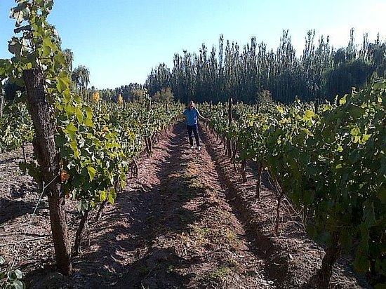 Postales Boutique Wine Hotels - Valle de Uco: el hotel esta en un viñedo