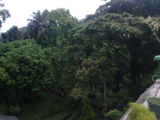 Forest - Glen: View from veranda