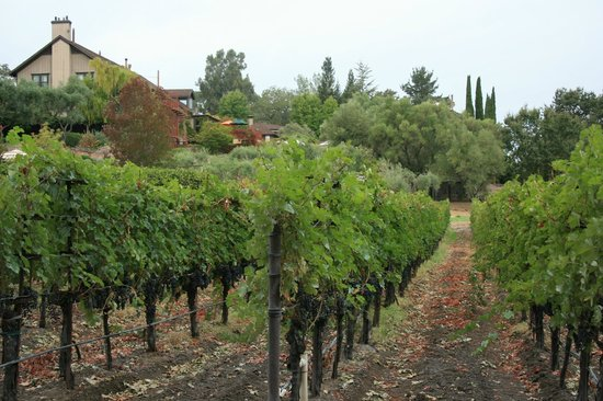 The Wine Country Inn : Take a walk right outside the door!