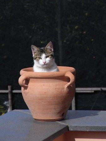 Our kittin named SPARK