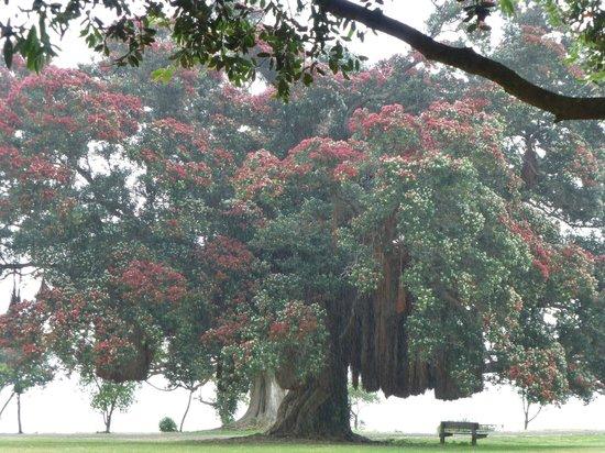 Waiomu Beach Cafe: Pohutukawa tree and sea view across the road