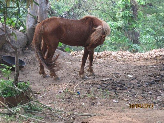 Brahmaputra Jungle Resort: Horse