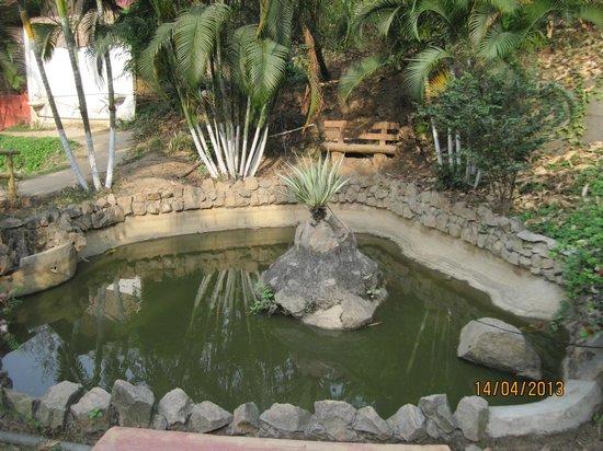 Brahmaputra Jungle Resort: Pond