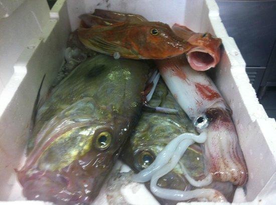 San Pietro , calamari e gallinelle