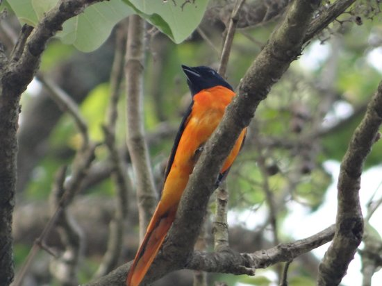 Panthalams Homestay: one of many local birds