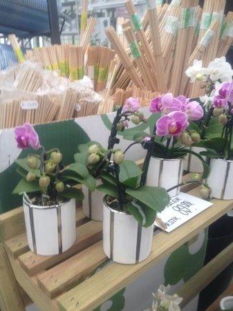 Langeskov Planteskole: orkideer