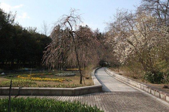 Handayama Botany: Floraison