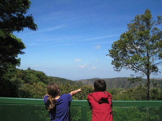 Children's Eternal Rain Forest: Awesome viewing platform at Bajo del Tigre