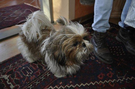 Hotel Bellavista: Il cagnolino