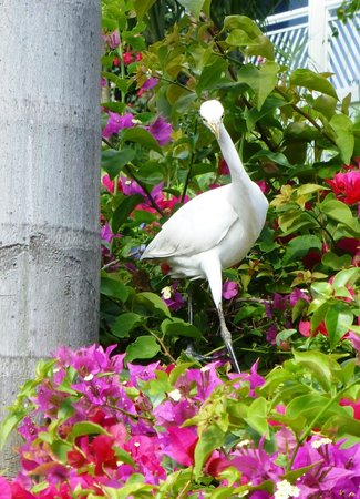 Beaches Turks and Caicos Resort Villages and Spa: wildlife on the grounds