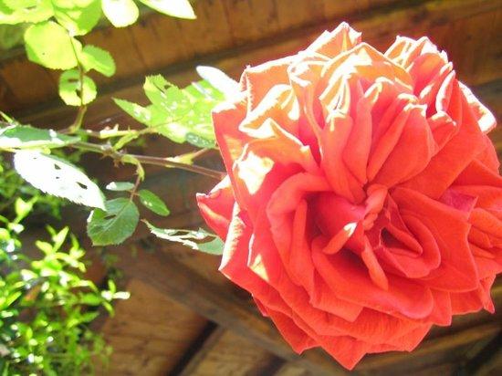 Il Casale dell'Ara delle Rose Bed & Breakfast: Rose