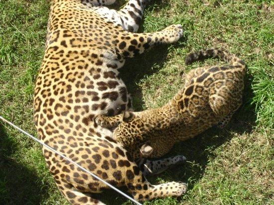 Zoo de Batan