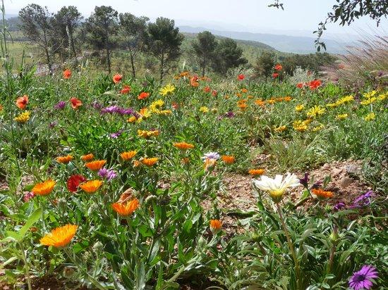 Jardin fleuri photo de kasbah timdaf demnate tripadvisor - Idee petit jardin fleuri brest ...