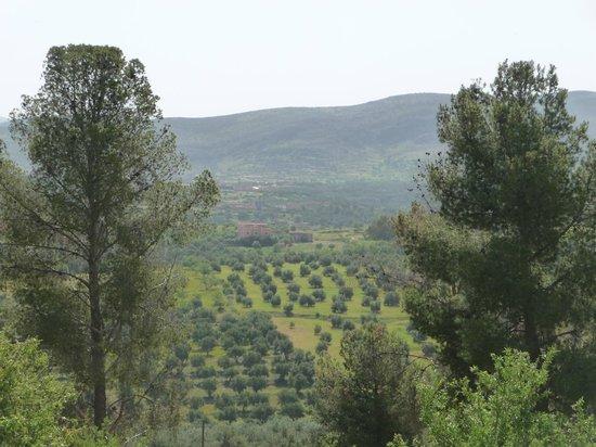 Kasbah Timdaf : vue sur les oliviers