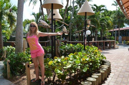 Starlite Hotel: Miami Seaquarium