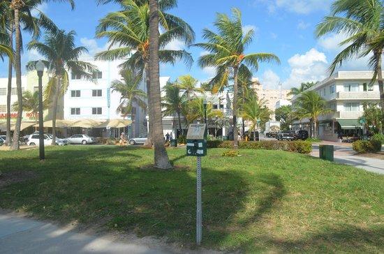 Starlite Hotel: Hotel area