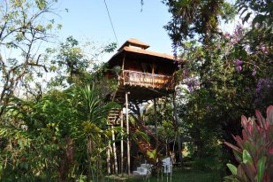 Hosteria El Carmelo: cabaña en el árbol