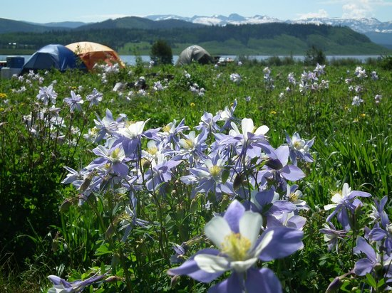 Clark, CO: Camping in the Columbine