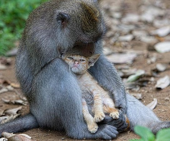 Naughty Monkey Day Tours: Happy monkey in love each other