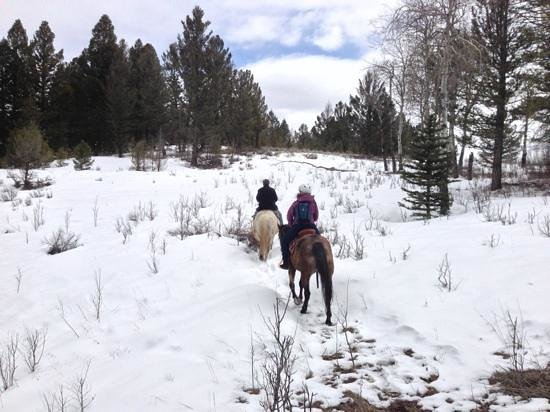 Jake's Horses: Jake taking us up one of the nearby mountains in Gallatin State Forrest (April)