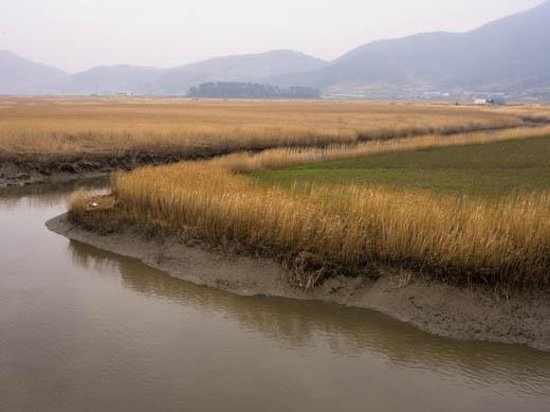Suncheon Bay Cyber Ecological Park: Reeds and waterway