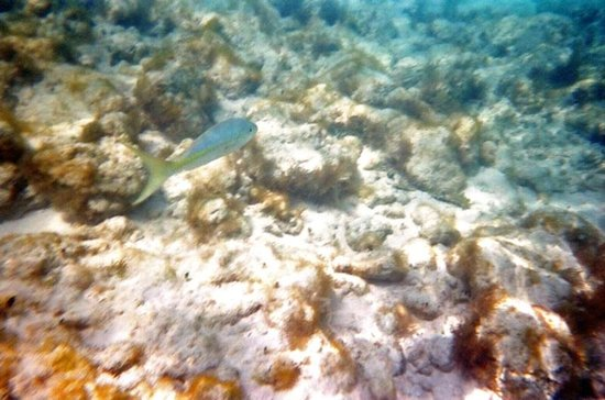 Fish I saw at Bight Reef