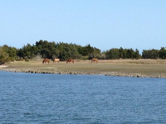 Crystal Coast Lady Cruises : wild Ponies!!