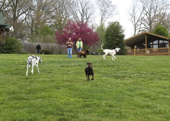 Barkwells, The Dog Lovers' Vacation Retreat: Playtime on the hill