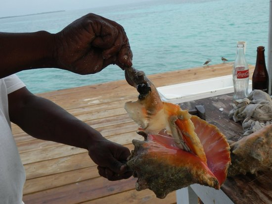 Blue Marlin Beach Resort: conch brought out of the shell