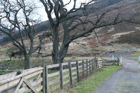 College Valley Estate: Drive to Dunsdale Cottage