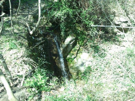 Via Julia Augusta: scorcio di ruscello naturale